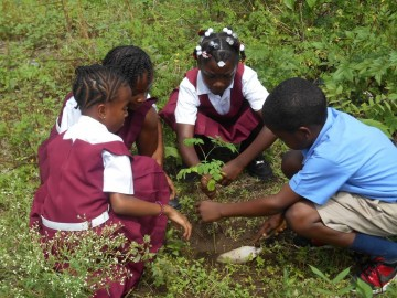 Students in St. Vincent and the Grenadines planting Trees, in the Tree planting competition