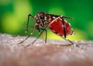 640_Aedes_aegypti_mosquito_2016_01_23_14_50_12